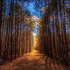 Photo by slayerlovnhippy - Merchants Millpond State Park, North Carolina