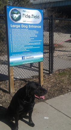 Do you know about downtown #Cincinnati Fido Field #dog #park?  I have the story on my blog.