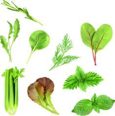 Herbs set, vector illustration [преобразованный].png