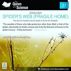 """Al-Qur'an al-Ankabut (The Spider) """"The parable of those who take protectors other than Allah is that of the spider, who builds (to itself) a house; but truly the flimsiest of houses is the Spider's house – If they but knew. Quran Verses, Quran Quotes, Hindi Quotes, Qoutes, Muslim Quotes, Islamic Quotes, Miracles Of Islam, Islamic Miracles, Islam And Science"""