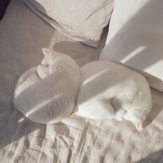 Find images and videos about cute, white and aesthetic on We Heart It - the app to get lost in what you love. Animals And Pets, Baby Animals, Cute Animals, Cat Aesthetic, White Aesthetic, Cute Creatures, Beautiful Creatures, Crazy Cat Lady, Crazy Cats