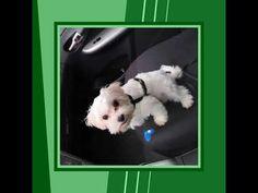 Autó Glanz autó tisztító ~ Bio-Cleaner Kft, Orgalco bio tisztítószerek Dogs, Animals, Sparkle, Animales, Animaux, Pet Dogs, Doggies, Animal, Animais