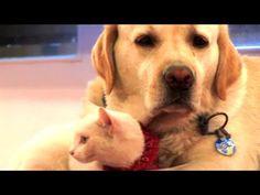 Amizade entre cão e gato