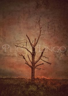 Fine Art Photography, Dead Tree, Lone Tree, Beach Outer Banks, Landscapes, Outer Banks, Nature, Botanical, Photography Print, Vintage Style by PhotoLingo, www.etsy.com/shop/PhotoLingo
