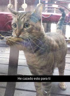 #kitten #cats #gatos