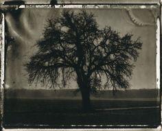 sarah moon / the pear tree