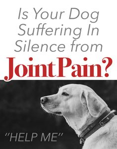 Is Your Dog Suffering In Silence from Joint Pain? Huge Dogs, I Love Dogs, Puppy Love, Pet Dogs, Pets, Doggies, Pet Vet, Game Mode, Pet Camera