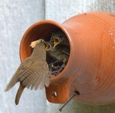 Williamsburg Bottle Birds and House Wren family  | Flickr - Photo Sharing! Wonderful photo and wonderful idea from William Dalton