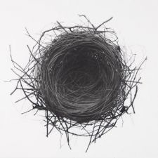 Jonathan Delafield Cook's charcoal drawing | Nest