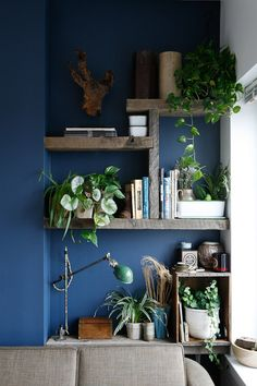 blue walls, gray shelves, green leaves