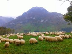 Pastos de Larraitz Basque Country, Golf Courses, Sheep, Outdoor, Outdoors, Outdoor Living, Garden