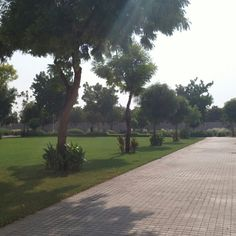 Earlier way out of zayed university