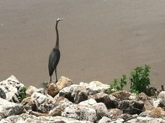 iPhone pic of a bird in Bettendorf's Leach Park along the Mississippi (Chris Baldus)