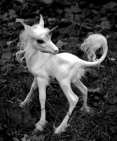 This unicorn would make for a pretty tattoo. I like the pose & action, plus the waves of the hair on head & tail. Could put a heart on her or any decor similar to  a My Little Pony... make her pink or whatever colors too, but all this with super-realistic detail. Yes! ~M.