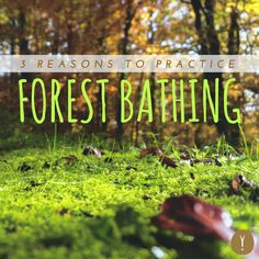 Being in nature is therapeutic. In Japan, it's actually recognized a real form of healing therapy — called forest bathing. Here's what it's all about, how you can do it too, and the health benefits you'll be sure to experience.