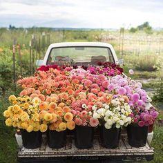 Flower Truck!