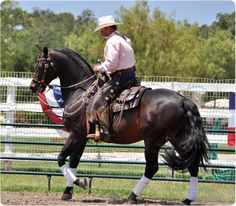 Cowboy Dressage Eitan Beth-Halachmy riding Santa Fe Renegade at the LHH clinic 2011