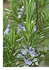 Herb Gardening Tips
