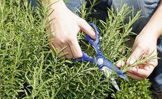 Von der Schuppenflechte über Herpes bis hin zum Sonnenbrand: Hier stellen wir Ihnen verschiedene Heilpflanzen aus dem Garten vor, die gegen häufige Hautprobleme eine gute Wirkung zeigen.