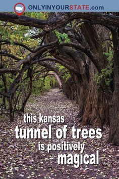 magical tunnel of trees is a hidden outdoor attraction right here in Kansas. Walk underneath the forest canopy and enter a bucket list worthy world of enchantment. Oh The Places You'll Go, Places To Travel, Places To Visit, Weekend Trips, Day Trips, Kansas Attractions, Kansas Wineries, New Orleans, Las Vegas