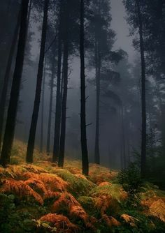 Ferns, The Enchanted Wood