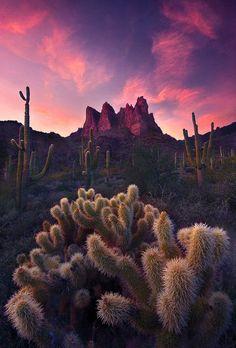 saguaro and cholla cactus, Superstition Mountains, Arizona