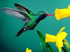 Conheça algumas espécies ameaçadas na fauna brasileira.