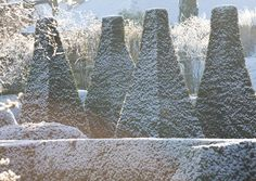 Topiary with Snow. Flower Photography by UK Garden Photographer Clive Nichols
