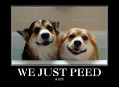 We just peed---- & I have wet myself laughing so hard!!