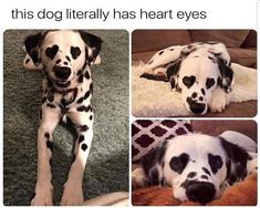 Animal Pictures Memes that will Make You Smile - 3
