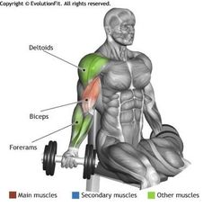 BICEPS -  SEATED DUMBBELL INNER BICEPS CURL | See more about Biceps Curl, Biceps and Curls.