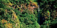 Reserva La Chara Pinta, Sinaloa. Este bosque de pino y encino es uno de los ecosistemas más frágiles e impresionantes de la Sierra Madre Occidental. ¡Conócelo y disfruta al máximo de su geografía!