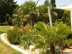 printemps 2009 Aloés en fleur Tropical Garden, Plants, Gardens, Landscape Architecture, Photo Galleries, Exotic, Lawn And Garden, Tropical Gardens, Plant