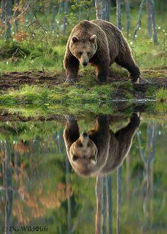 Love this shot! #wildlife #naturephotography #photography #nature