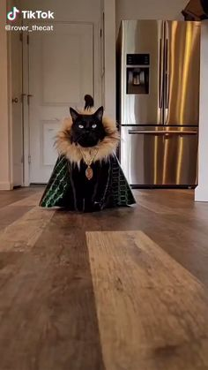 Video by @rover_thecat   Funny Animal Videos & Tik Tok Videos Funny   Funny Dogs Cute Animals