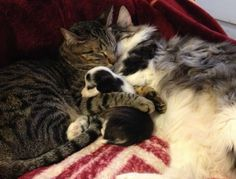 Kitty + Kitty + Puppy = Tender