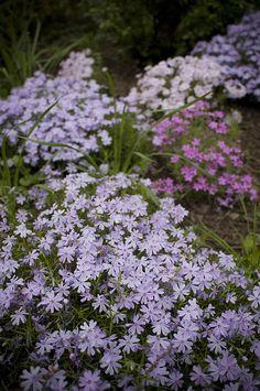 Purple Garden by Jessica Berlin