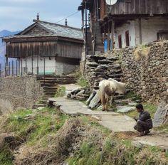 """In his own world    #kullu #himachalpradesh #india #wanderlust #travel"