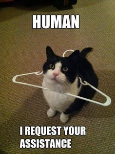 Human I Request Your Assistance #catoftheday