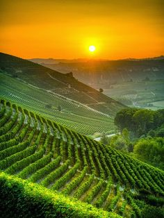 Italy's Vineyards at Sunset