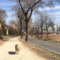 한강  봄 바람에 흔들리는 강아지 마음