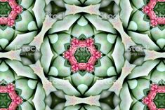 Digitally Designed Modern Style Succulent Inspired Mandalas from my. Abstract Photos, Image Now, Modern Design, Succulents, Royalty Free Stock Photos, Digital, Creative, Inspiration, Inspired