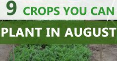 There are over 30 different crops you can plant in August. I am going to focus on the 9 crops you can plant in August that are the base fall & winter crops.