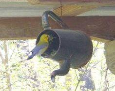 Creative, pretty birdhouse. -KWA