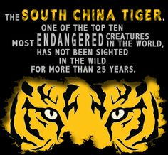 Endangered status of the South China Tiger