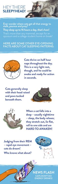 This infographic shares information on Feline Sleep Habits - How Cats sleep and how much cats sleep.