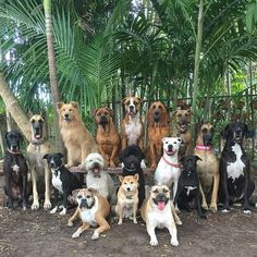 Happy Pictures, Dog Pictures, Animal Pictures, Beautiful Dogs, Animals Beautiful, Cute Animals, Group Of Dogs, Dog Cages, Pet Dogs