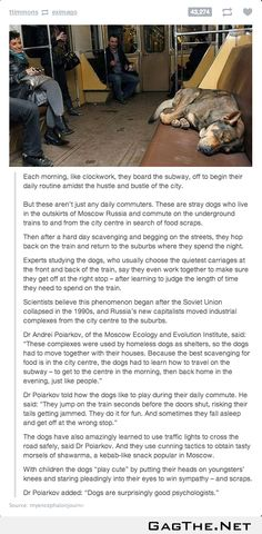 Psychologistically homeless dogs in Russia