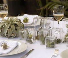 Bring nature to the table with these terrariums and air plants