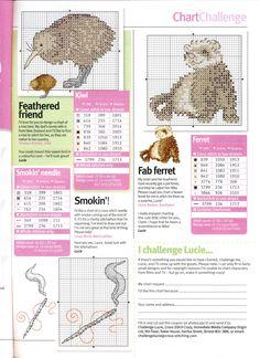 Kiwi and Ferret  Too Cute!